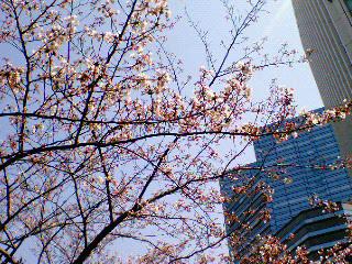 桜が咲いた!!
