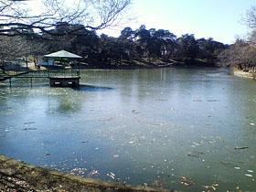 ボート池が凍ってる...