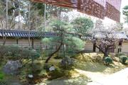 庭園と悲田梅