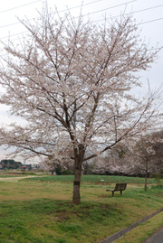 花の丘公苑にて