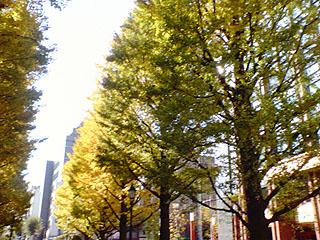 色づく街路樹